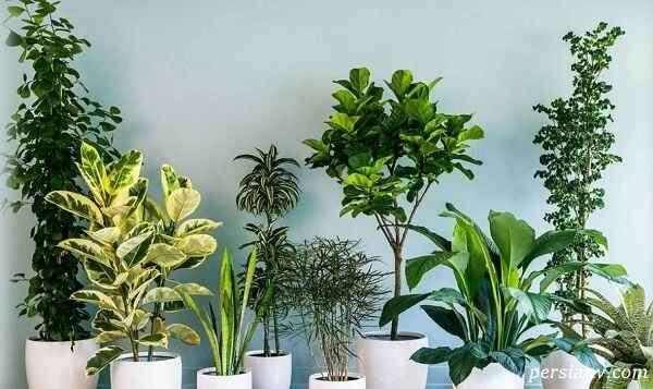 نکات نگهداری گیاهان آپارتمانی در خانه یا محلکار + عکس و اینفوگرافی