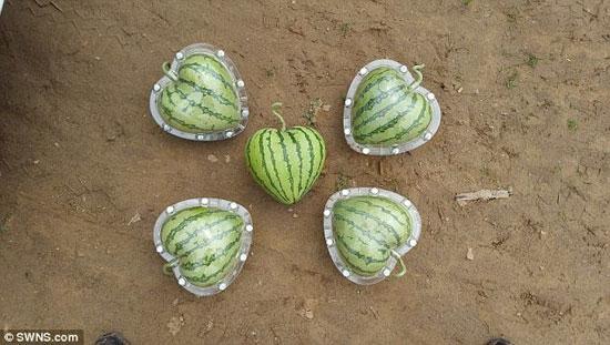 تولید میوه به شکل دلخواه