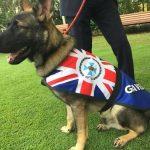 شغل جدید سگ مهربانی که از آکادمی پلیس اخراج شده بود!
