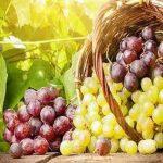 ترکیبات انگور موجب نابودی سلول های این سرطان می شود!