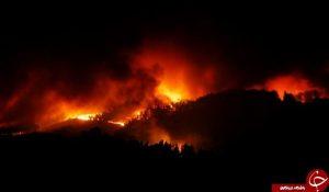 آتش سوزی در پرتغال ، ۳۹ نفر زنده زنده سوختند+ فیلم
