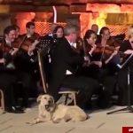 ورود ناگهانی سگ بازیگوش به وسط استیج کنسرت زنده!