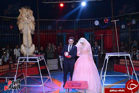 مراسم نامزدی در میان حیوانات