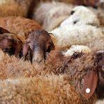هشدار در مورد شیوع تب کریمه در ماه محرم
