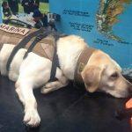 سگ زندهیاب مکزیکی که تاکنون جان ۵۲ نفر را نجات داده است!
