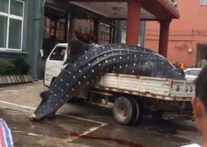 فروش نهنگ غولپیکر در بازار ماهیفروشان چین !