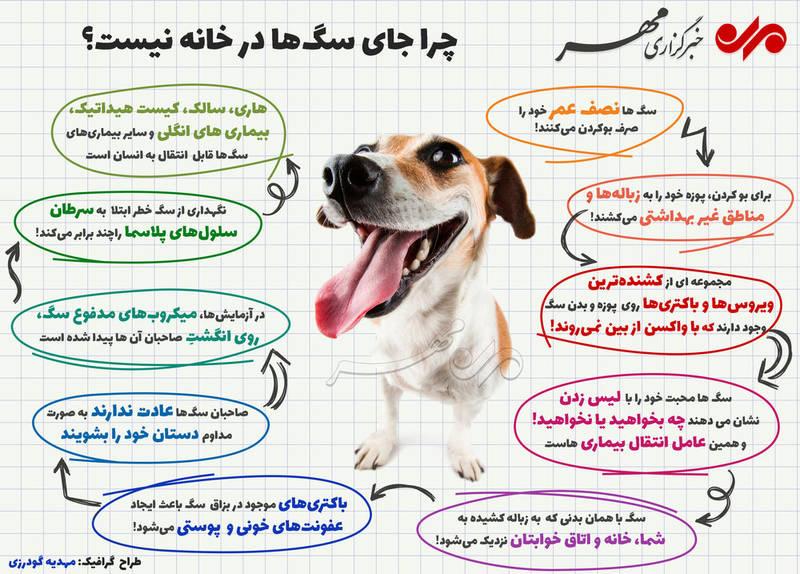 معایب نگهداری سگ در خانه