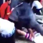 حمله یک فیل به ۲ گردشگر ایرانی در تایلند!