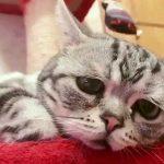 افسردهترین گربه جهان، سوژه پرطرفدار فضای مجازی!