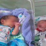 ماجرای هجوم مورچه ها به نوزادان دوقلو در کنار سطل زباله بیمارستان صحت دارد؟