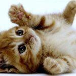 پانسیون لوکس برای حیوانات | برس کشی و ناخن گیری و ماساژ سگ فقط ۳۵ هزار تومان!