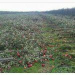 ماجرای انتشار عکس تخریب یک باغ سیب در فضای مجازی!