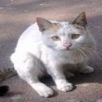 راز واکنش گربهها به عبارت مجید و چالش مجید!