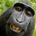 میمون سلفی بگیر چهره سال شد!