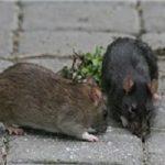 از شایعه تا واقعیت حمله موشهای آدمخوار به تهرانیها!