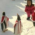 کریسمس برای پنگوئنها در چین!