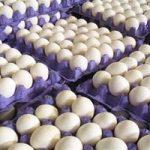۱۱۶ تن تخم مرغ وارد کشور شد