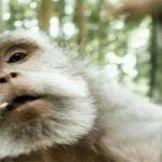 میمونی که عکس سلفی دو نفره انداخت