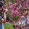 گردشگران نوروزی در شیراز + جاذبههای گردشگری در تهران