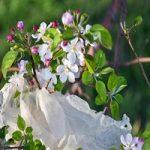 پلاستیک هایی که زیبایی باغ های ارومیه را گرفته
