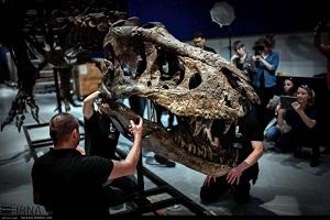 تصاویری از اسکلت دایناسور ۶۵ میلیون ساله در پاریس