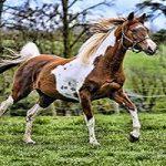 تصویر وحشتناک از اسیدپاشی به صورت یک اسب