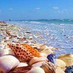 لاشه یک موجود مرموز در ساحل راسیلی در جنوب ولز پیدا شد
