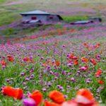 سمفونی رنگها در خلخال به اسالم, رویاییترین جاده جنگلی کشور!