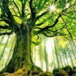 تصاویری از ترسناک ترین و عجیب ترین درخت جهان