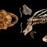 کشف جسد قدیمی ترین انسان با ۱ میلیون سال عمر