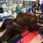 خرس ۲۱ ساله به دندان پزشکی رفت
