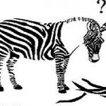جنجال نمایش خر رنگ شده به جای گورخر در یک باغ وحش!!