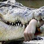 ماجرای حمله کروکودیل به زنی جوان و خوردن او!!