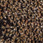 تصاویری از حمله زنبورها به ساکنان ساختمان مسکونی در تهران!!