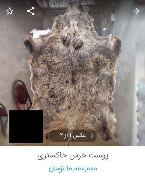 حیوانات خشک شده