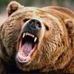 تصاویری از حضور یک خرس وحشی و عجیب در خلخال!!