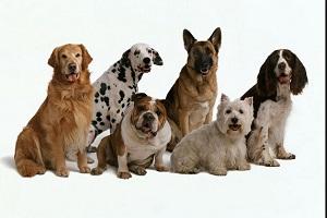ماجرای حیرتانگیز و وحشتناک سوزاندن ۳۰۰ سگ زنده در اهواز!!