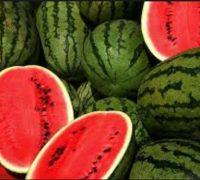 تولید هندوانه های عجیب و جالب به اندازه دانه های زیتون!!