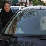 ممنوع شدن سگ گردانی در تهران و مجازات سنگین برای متخلفان