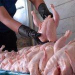 آخرین قیمت هر کیلوگرم مرغ به چند هزار تومان رسید!؟