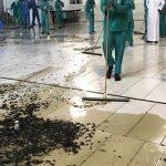 تصاویری از هجوم جیرجیرک های سیاه به مکه