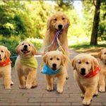 سگ مهربان برای ۵۰ حیوان نوزاد مادری کرد!