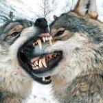 اولین سالگرد ازدواج یک زوج در کنار گرگ ها