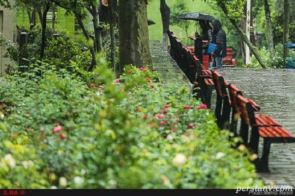 تصاویری از بارش باران و حال و هوای آخر سال در تهران