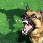 حمله سگ های ولگرد به یک خانم در سبو بزرگ لواسان!!