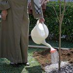 غرس دو نهال میوه توسط رهبر انقلاب در روز درختکاری