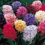 مورد عجیب تورم | قیمت گل سنبل در آستانه نوروز ۹۸!!