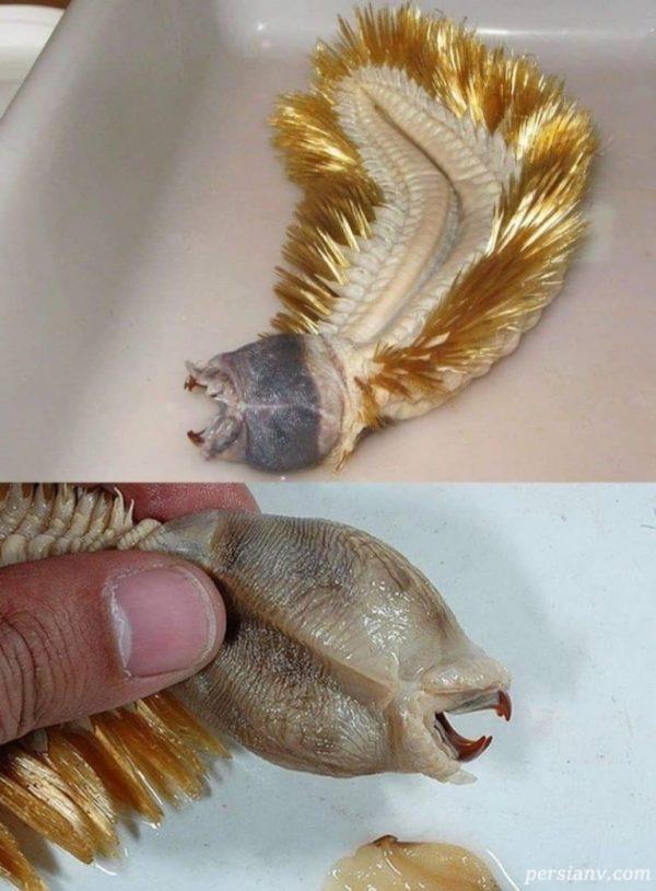 عجیبترین موجودات روی زمین