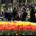 تصاویری زیبا از جشنواره گل های پیازی مشهد را ببینید