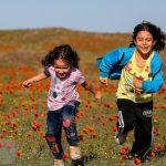 تصاویری دیدنی از دشت شقایق وحشی | ایران زیباست!